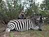 Burchell_s_Zebra.JPG