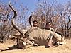 Kudu110.jpg