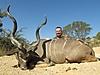 Kudu49.jpg