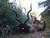 Kudu53.jpg