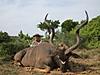 Kudu_I1.jpg
