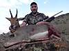 Mountain_Reedbuck5.jpg