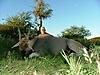 Namibia_hunting_63_.JPG