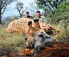 Tys_Giraffe_Hunt_web.WMV