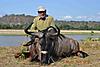 Wildebeest_Sergio.jpg