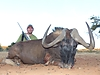 black_wildebeest6.jpg