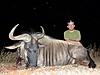 blue_wildebeest9.jpg