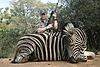 bob_s_zebra.jpg