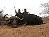buffalo17.jpg