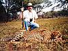 cheetah_hunting-15.jpg