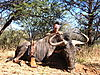 hunt-namibia1.JPG