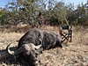 hunting-buffalo17.jpg
