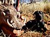 hunting-dog-07.jpg