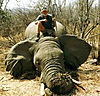 hunting-elephant12.jpg