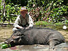hunting-giantforest-hog.jpg