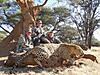 hunting-leopard-1.jpg