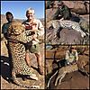 hunting-leopard30.jpg