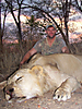 hunting-mozambique-02.jpg