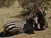 hunting-namibia-045.jpg