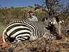 hunting-namibia-085.jpg