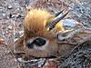 hunting-namibia-086.jpg