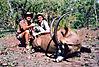 hunting-roan-2.jpg