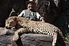 leopard-hunt4.jpg