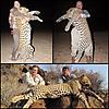 leopard-hunt6.jpg