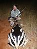 zebra20.jpg