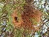 bird-nest1.JPG