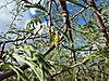 bush-flower.JPG