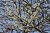 bush-tree.JPG