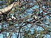dove-hunting.JPG