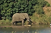 elephant-vovodo-river-car.jpg