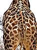 giraffe10.jpg