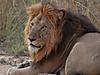 hunting-africa-071.jpg