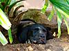 hunting-dog-02.jpg