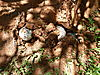omajowa-mushroom-02.JPG