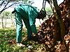 omajowa-mushroom-06.JPG