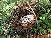 omajowa-mushroom-15.JPG