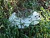 omajowa-mushroom-25.JPG