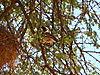 weaver-bird-africa.JPG