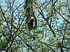 weaver-bird.JPG