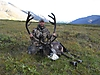 barren-ground-caribou-hunt_RG.JPG
