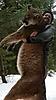 cougar-hunt-canada-02.jpg