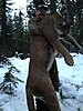 cougar-hunt-canada-04.JPG