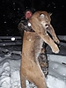 cougar-hunt-canada-05.jpg