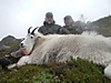 mountain-goat-hunt.jpg