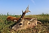 roe-deer-hunting-280gr.jpg