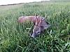 roe-deer-hunting-300gr.jpg
